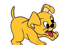 O cão coitadinho