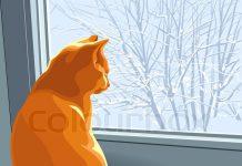 A história do Kenny, o gato que caiu da janela