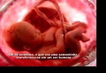 Desenvolvimento do feto