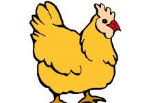Mamã galinha